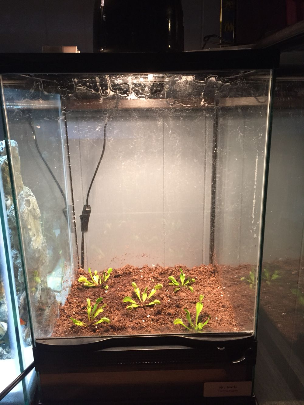 Makeshift Terrarium For Venus Fly Traps House Plants Carnivorous