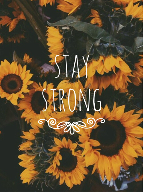 motivational quotes Tumblr Sunflower wallpaper