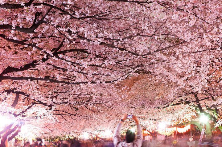 仕事帰りのデートで行きたい!東京都内のおすすめ「夜桜鑑賞スポット」6選