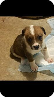 Pin By Joshua Allen On Puppies Pets Pet Adoption Collie Mix