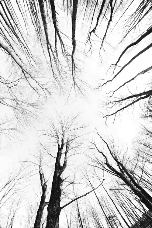 Charcoal Trees Black And White Aesthetic White Photography Gray Aesthetic