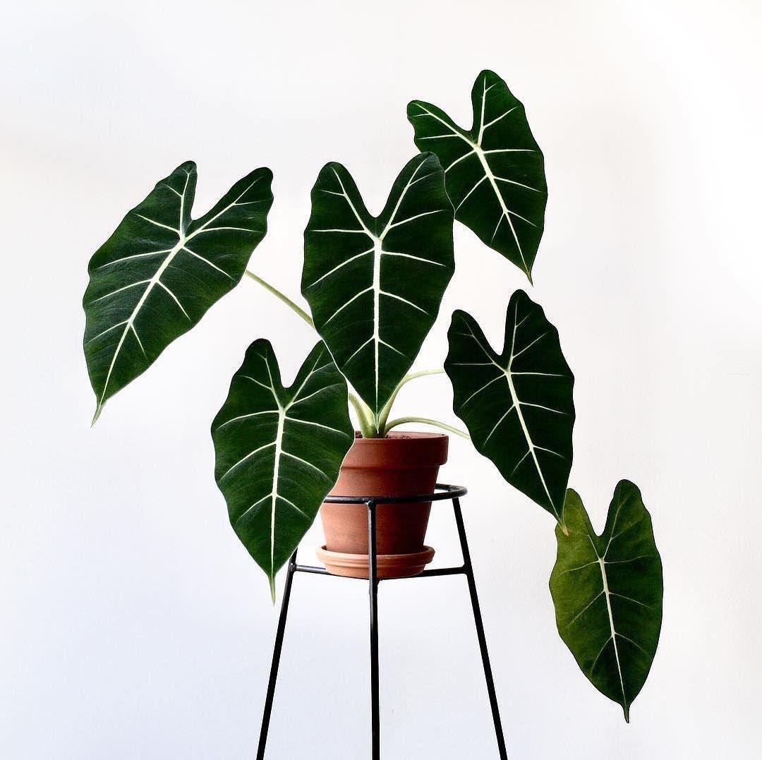Luftverbesserer: Diese Pflanzen sind super für die Wohnung! #plantlife