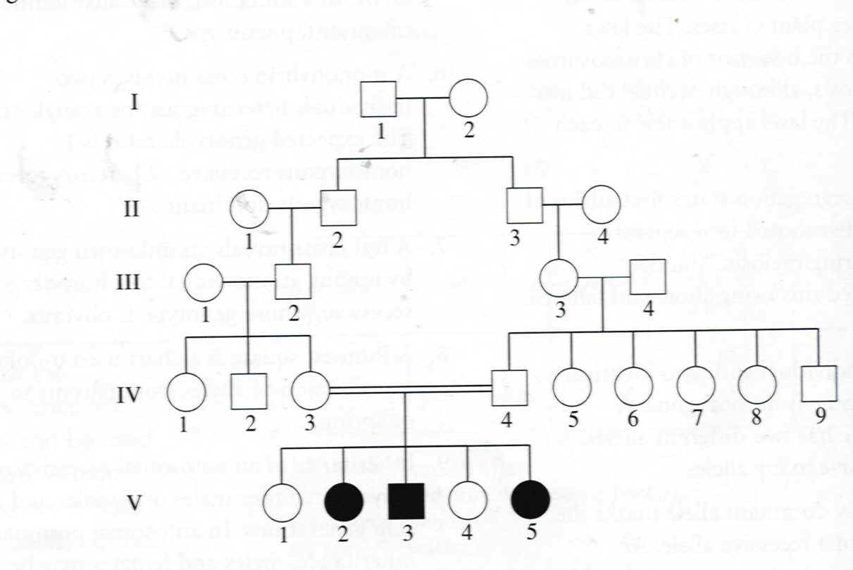 genetic family tree template google search family genealogy