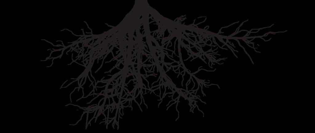 Roots 1024x434 Png 1024 434 Tree Roots Tattoo Roots Tattoo Elements Tattoo