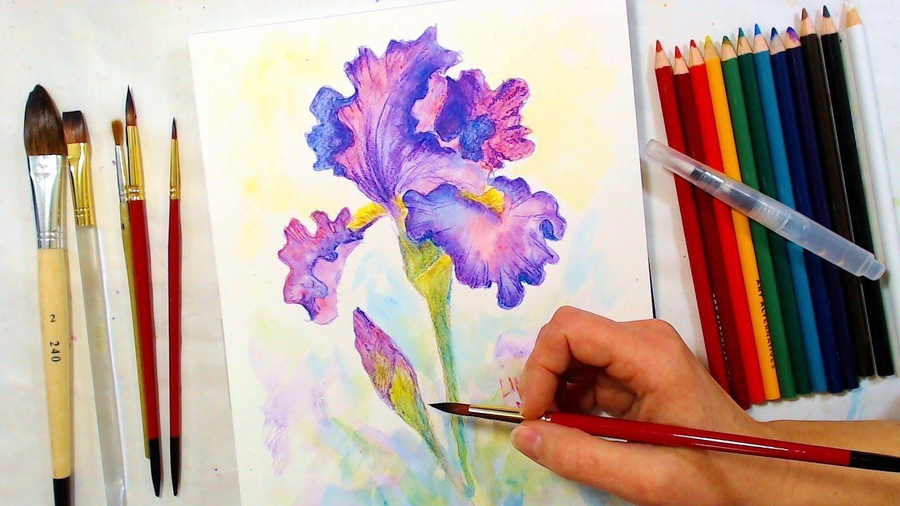 Iris Watercolor Pencil Drawing and Painting Tutorial