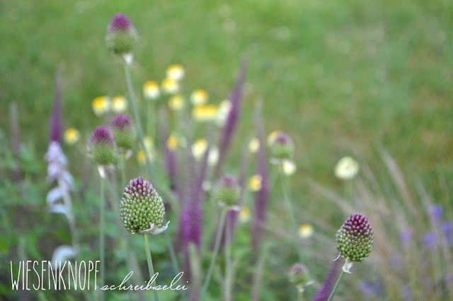 Anthemis, Stipa, Allium, Lavendula, Teucrium