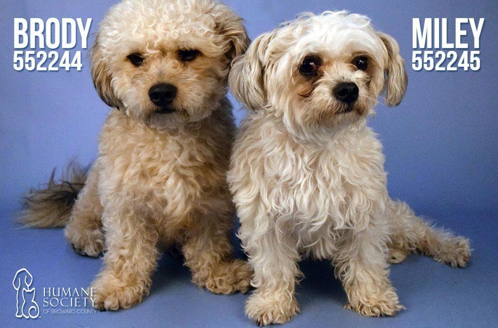 Broward Humane Society Adoptable Pets May 11, 2016 NBC