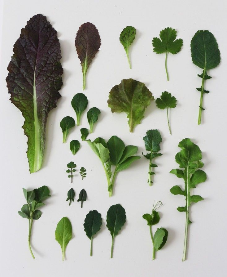 8 Winter Garden Greens to Grow Now #wintergardening