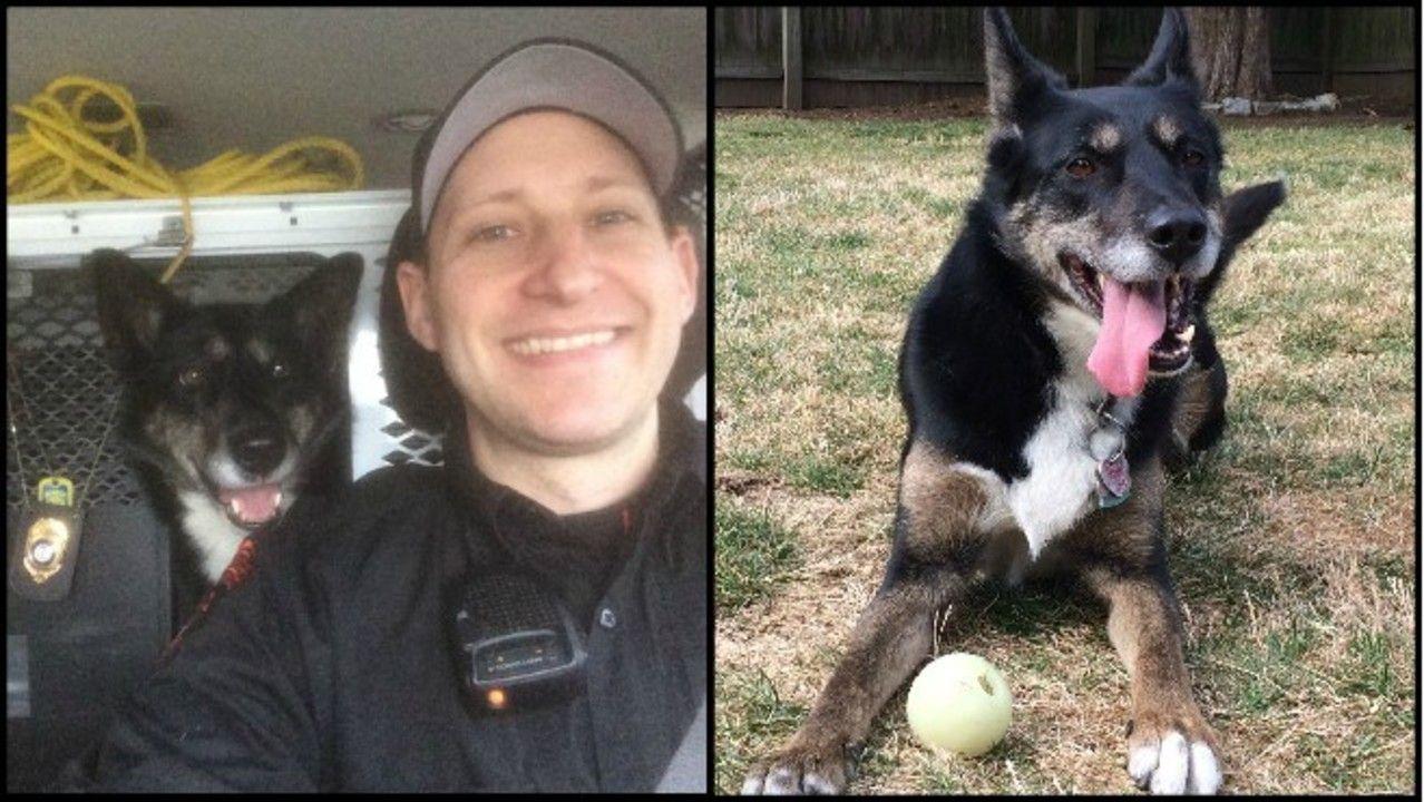 Ri State Police K9 Ruby Semi Finalist In Hero Dog Award Rescue