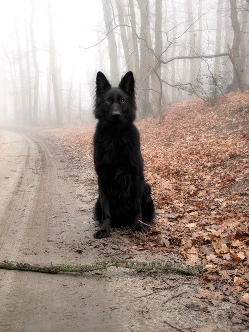 """she's called """"Black Magik"""" ... she waits for hours for me to come back from an errand. if any other car tries to come down our road to our house when i'm not home ... she pulls a magic act that """"scares the piddle"""" from any """"unplanned guests"""" ..."""