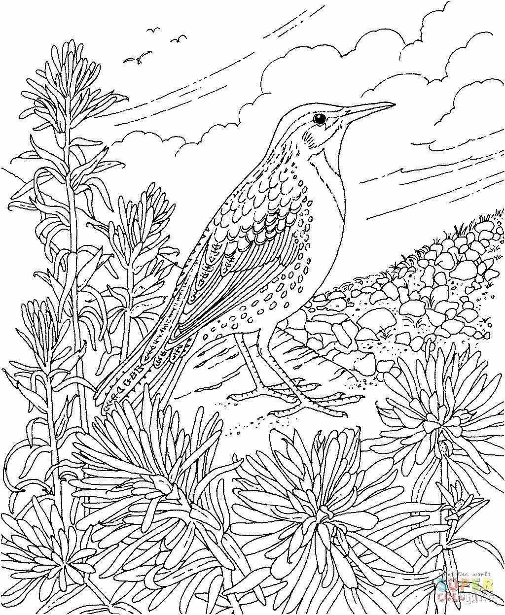 California State Bird Coloring Page Fresh Alabama State Flower Coloring Sheet Quorumsheet In 2020 Bird Coloring Pages Flower Coloring Pages Coloring Pages