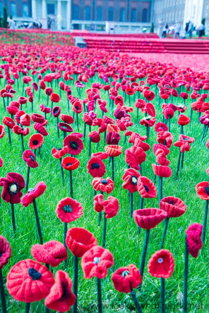 5000 Poppies at the Chelsea Flower Show | Stricken und häkeln ...