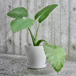 Photo of Vaso da fiori con sottopentola M – Fieno grigio