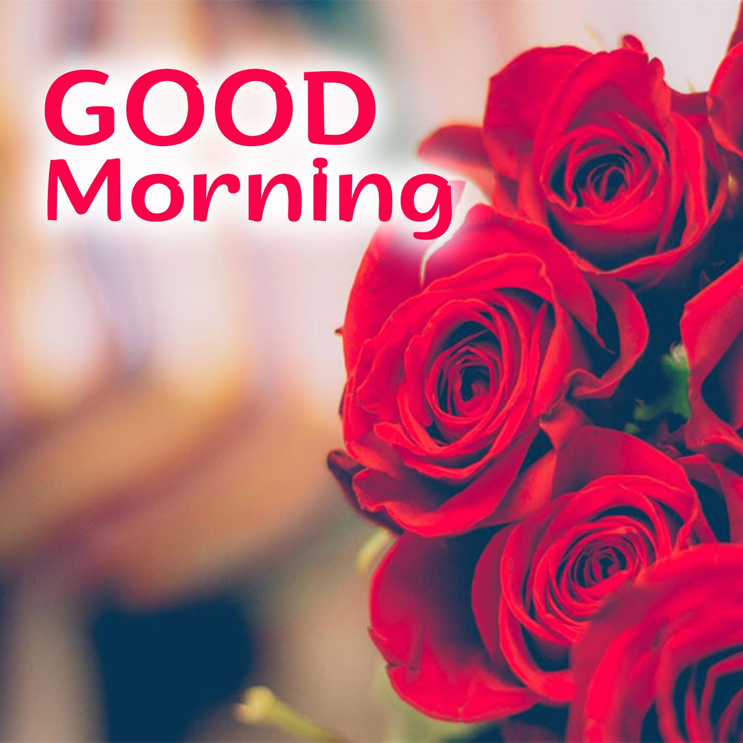 Best Good Morning Flowers Images For Ios And Android Good Morning Flowers Good Morning Flowers Images Good Morning Wishes Friends