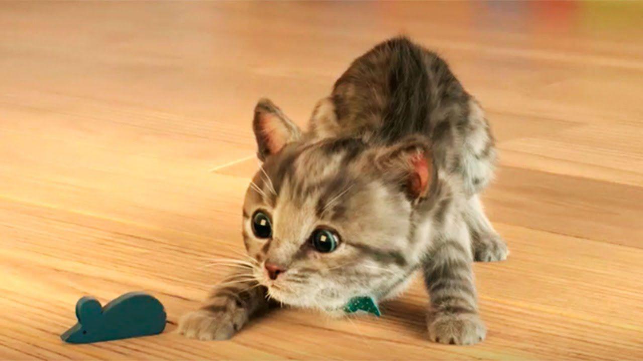 Игры мой милый кот