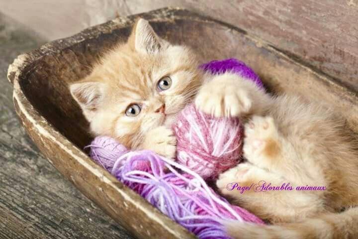So Adorable Avec Images Cute Kittens