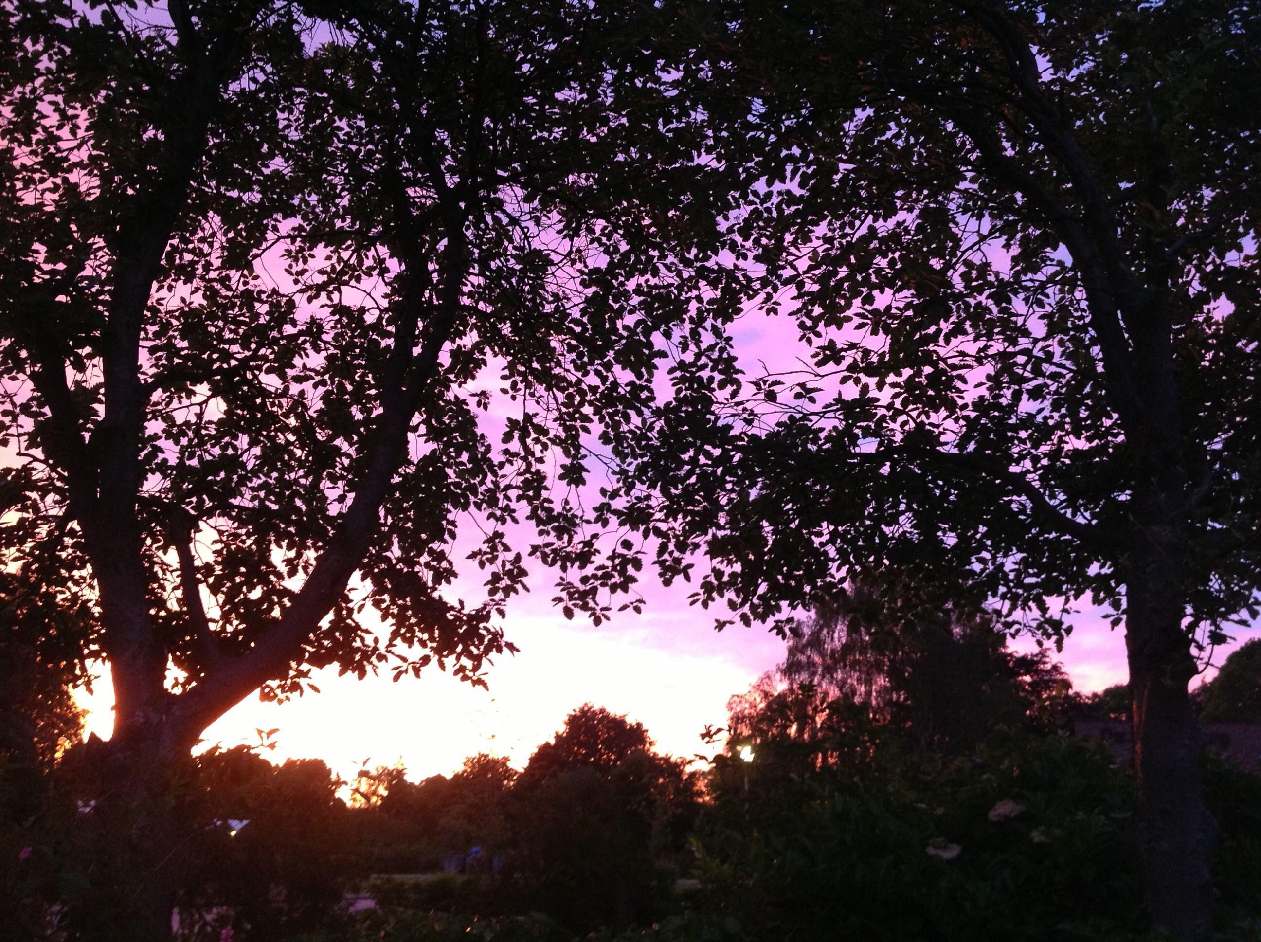 Sunset in my garden