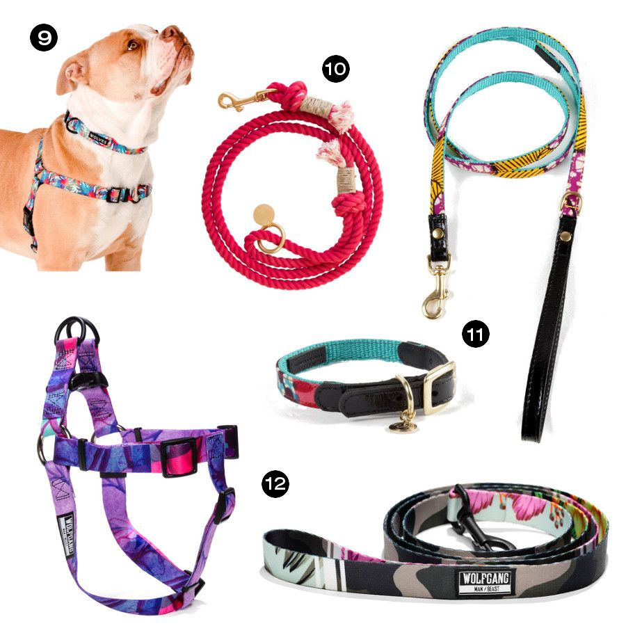 Holiday Gift Guide Collars Leashes And Harnesses Dog Milk