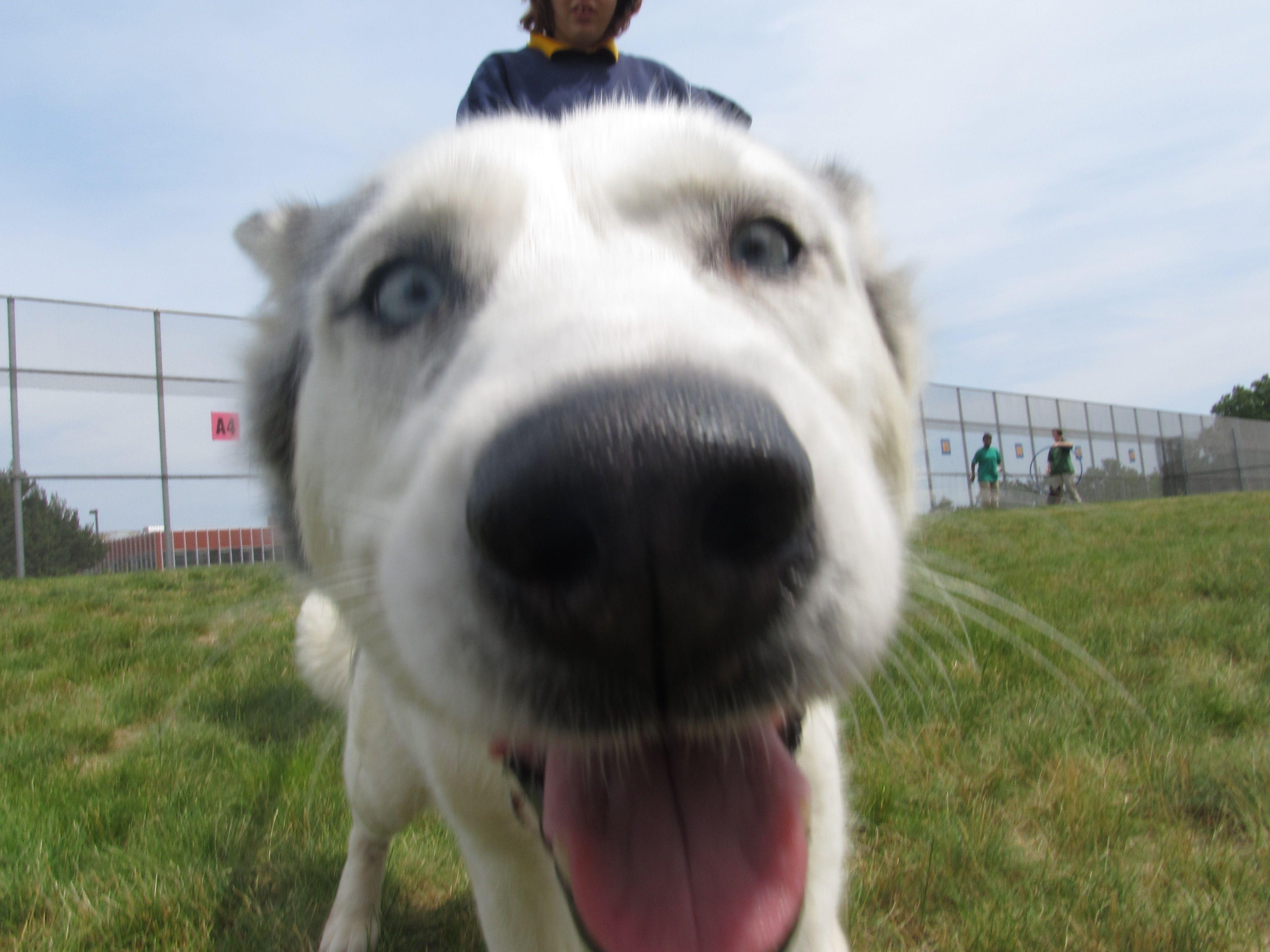 14++ Macomb county animal shelter ideas