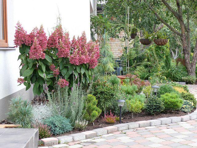 Hydrangea Pinky Winky Hydrangea Landscaping Amazing Gardens Plants