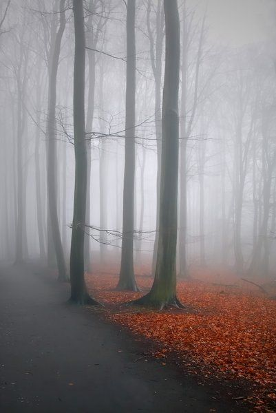 A misty hideaway is part of Canvas photography - 4 5 A misty hideaway