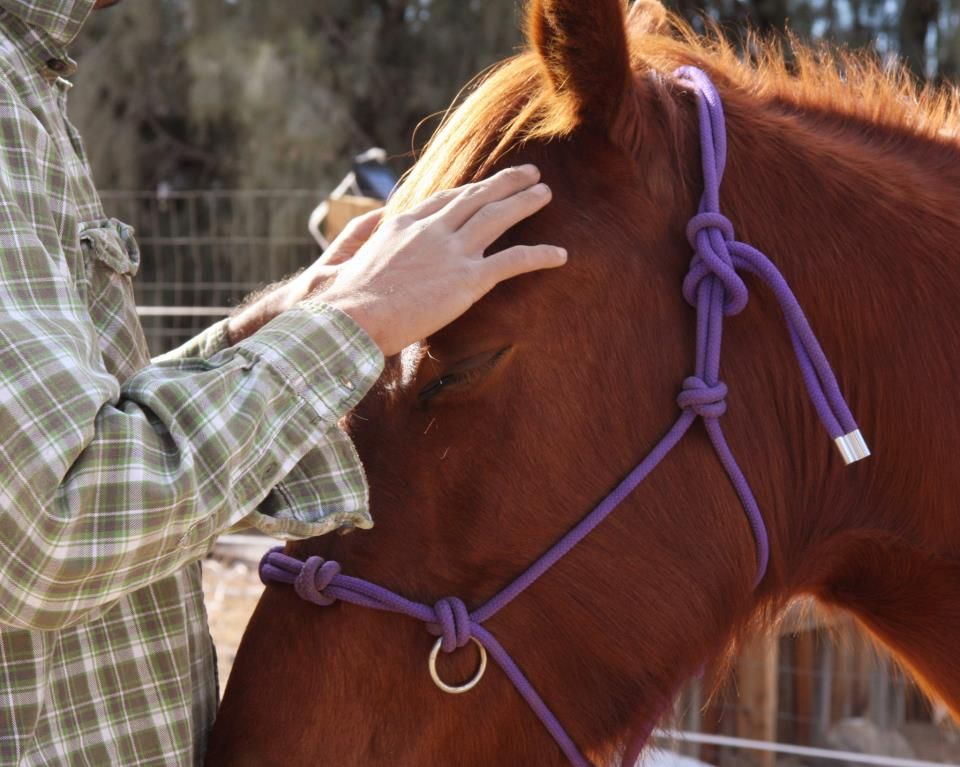 Rebuilding Trust Through Equine Therapy.How Equine Therapy Can Help ...