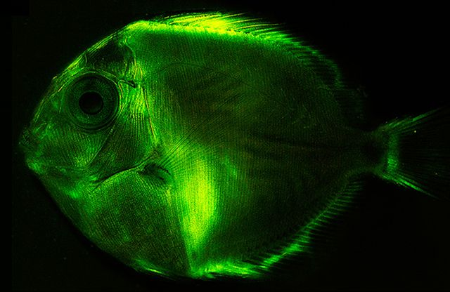 180 Species Of Glowing Fishes Light Up Underwater Worlds   RYOT News