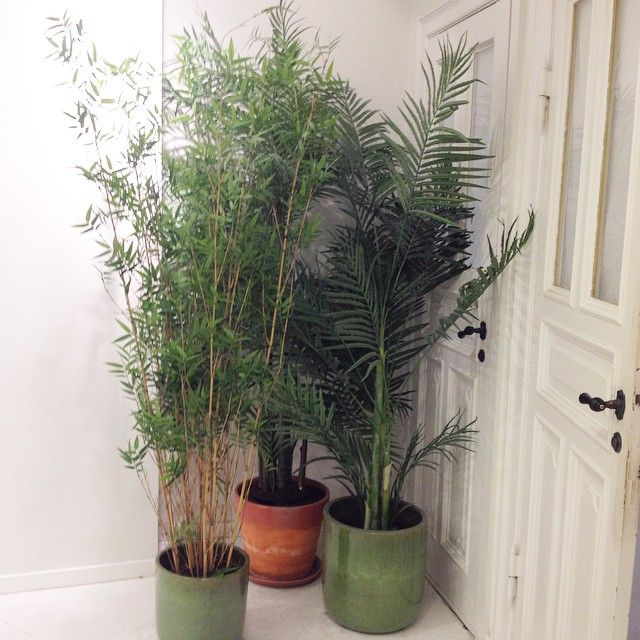 plant inspiration from the Ganni store