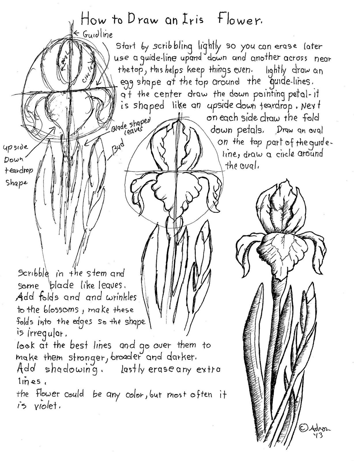 How To Draw An Iris Flower Printable Worksheet Art Techniques