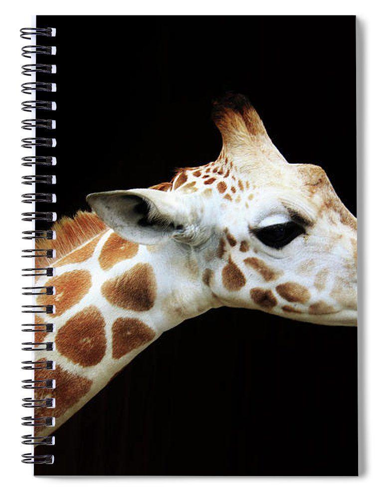 Olllie Giraffe Spiral Notebook for Sale by Karen Silvestri ...