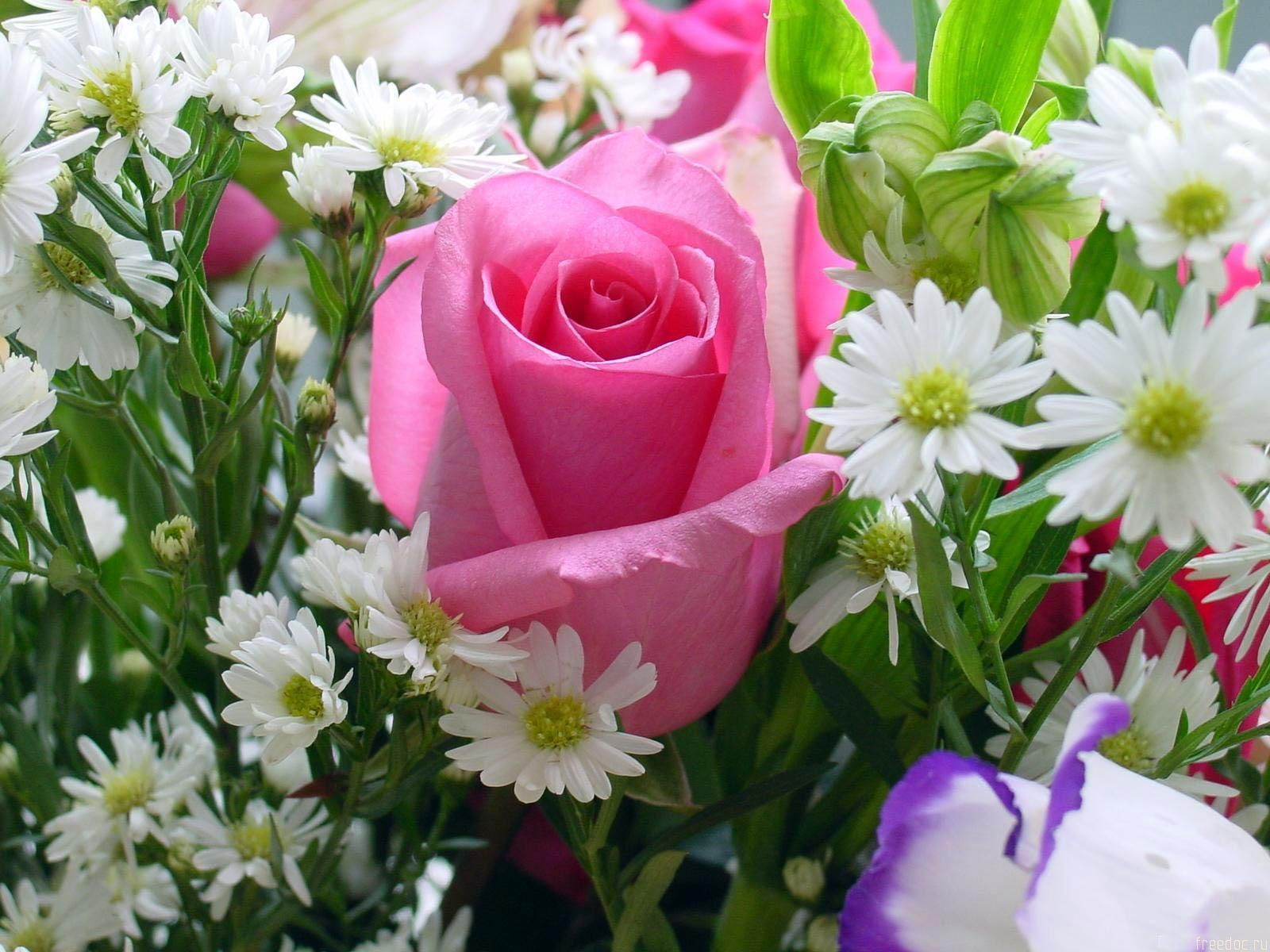 Find This Pin And More On Flowers A Single Pink Rose