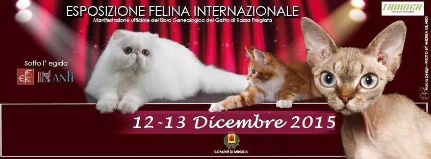 Mary Poppins's House: Esposizione Internazionale Felina di Trieste 12 -13 DICEMBRE