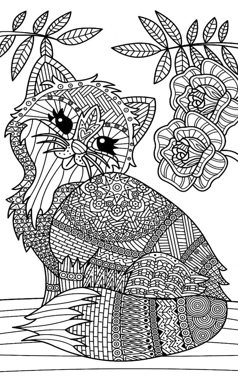 Ausmalbilder Mandala Katzen Ausmalbilder Webpage