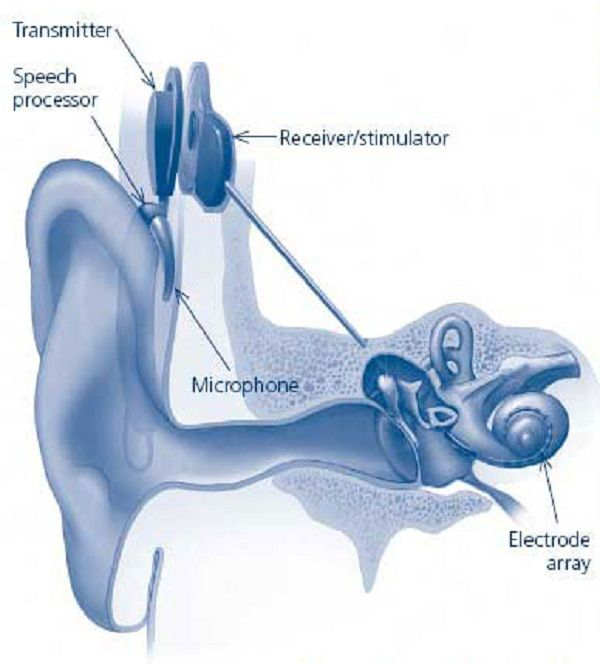 Human ear diagram worksheets health pictures of anatomy pictures human ear diagram worksheets health pictures of anatomy pictures health information ccuart Image collections