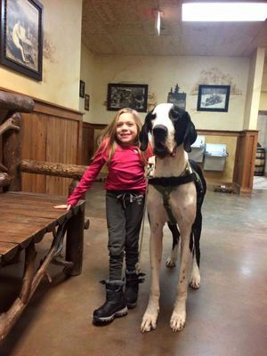 Pin By John Laven On Family Service Dogs Dogs Dog Friends