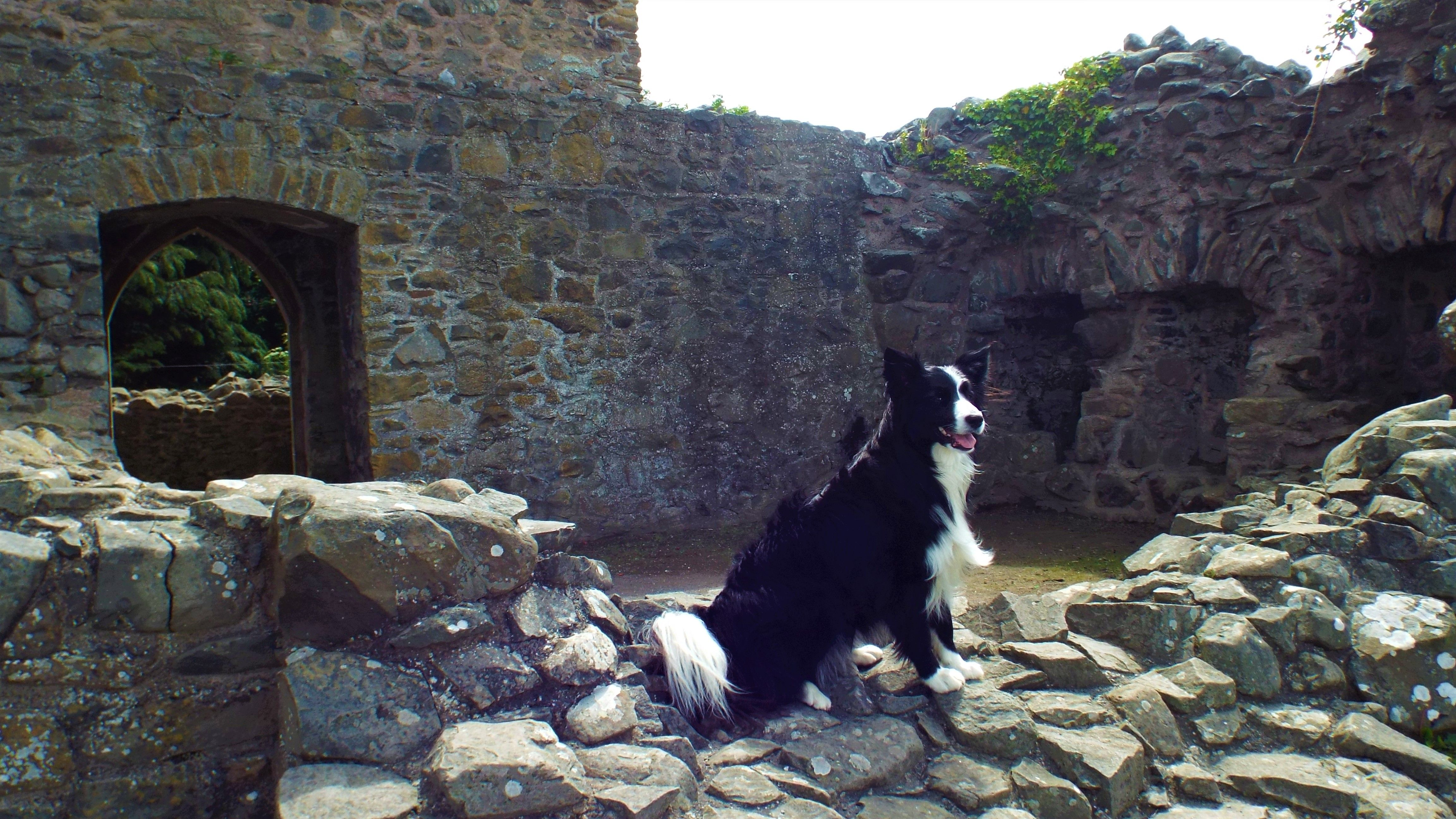 Sketrick Castle in Comber County Down, Northern Ireland.  Asha the star of County Down was here...