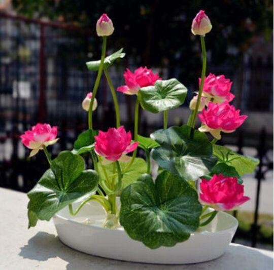 8 pcs / bag ,Lotus seeds , flower seeds, DIY potted plants, indoor ...