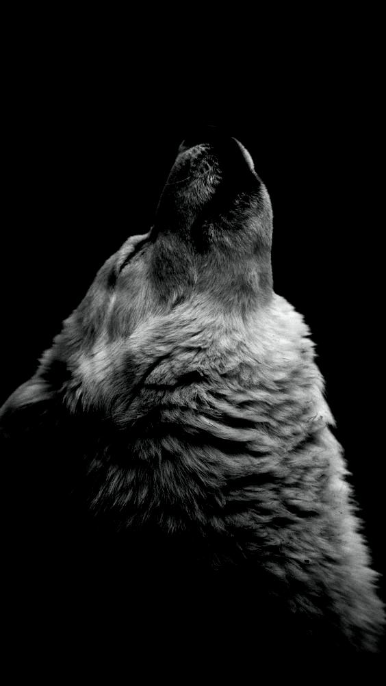 1080x1920 Wolf Moon Lie Predator 75803 750x1334 Wolf Iphone Wallpaper A Gray Wolf Iphone 7 Wallpaper 1080x1 In 2020 Iphone Wallpaper Wolf Wolf Call Wolf Wallpaper