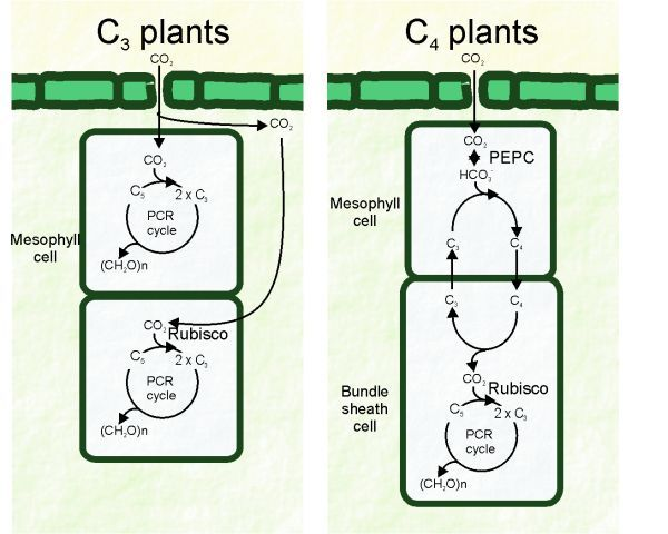 Researchers Discover A Special Power In Wheat Biology Plants