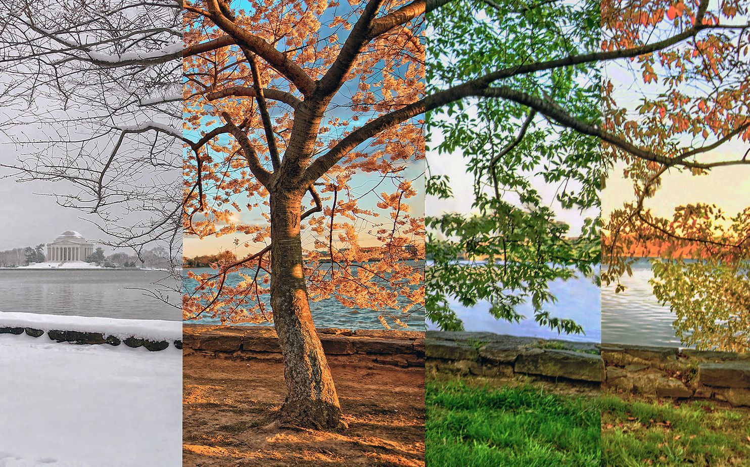 Snow To Fall Color Comparing The Beauty Of All Four