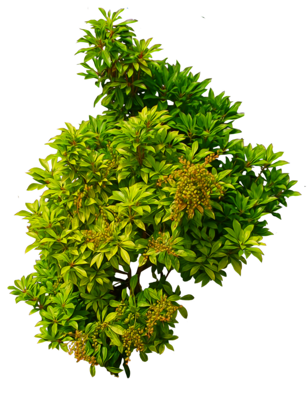 Shrub 01 png by alz stock and on for Flowering landscape plants