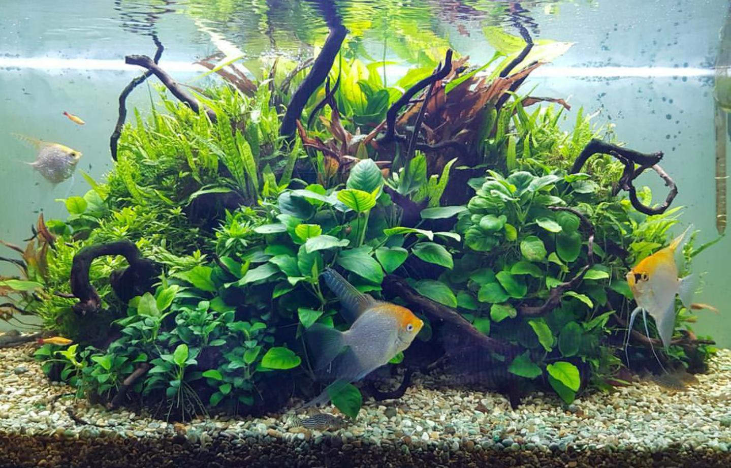 60 Beginner Aquascaping Ideas Aquarium Aquascape Aquarium Fish