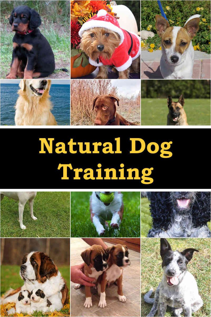 Highly Important Tips on How to Train Your Puppy