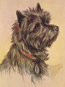 Cairn Terrier Lucy Dawson Google Search Cairn Terrier Dog Sketch