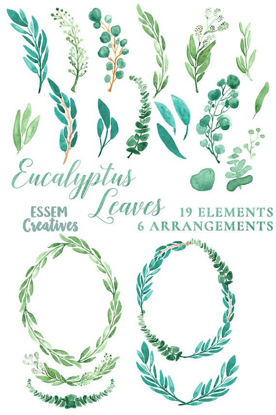 Eucalyptus Watercolor Leaves Clipart Leaf Wreath Green Branch