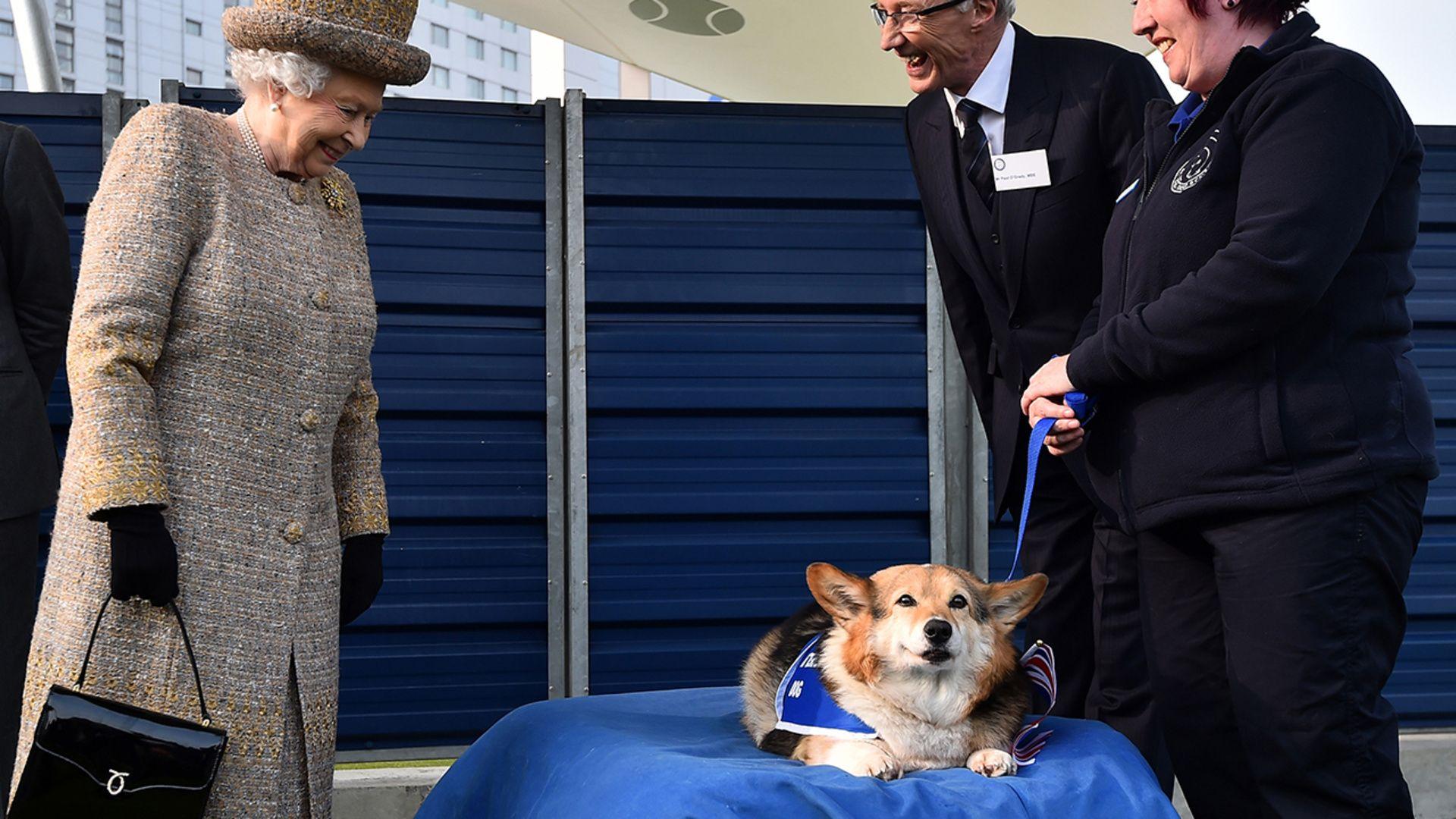 This Week S Can T Miss Celebrity Photos Battersea Dogs Corgi Corgi Dog