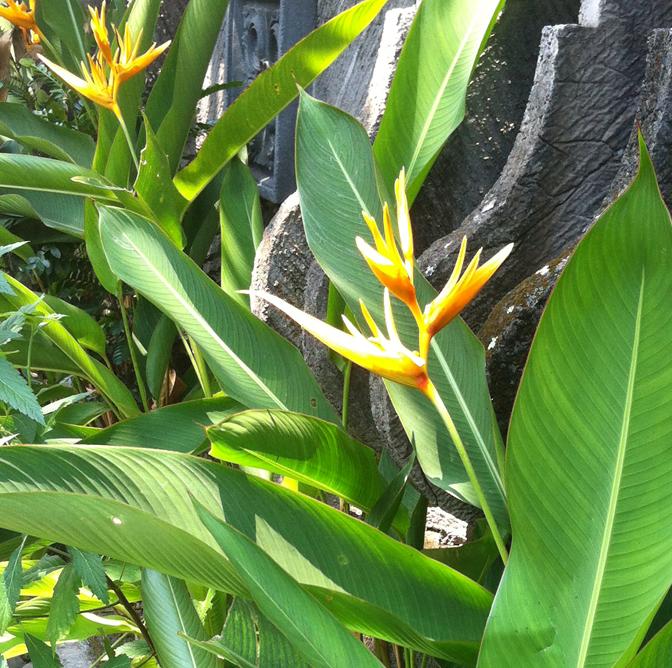 Bloemen uit Bali | Ed Bones