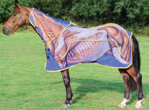 Equine Mage