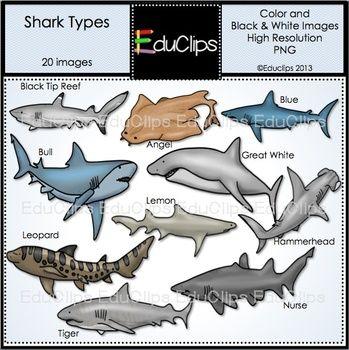 Shark Types Clip Art Bundle Educlips Clipart Shark Art Bundle Clip Art
