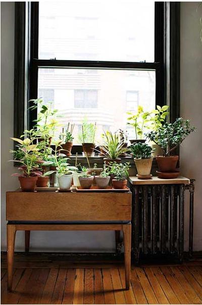 Window sill pot plants
